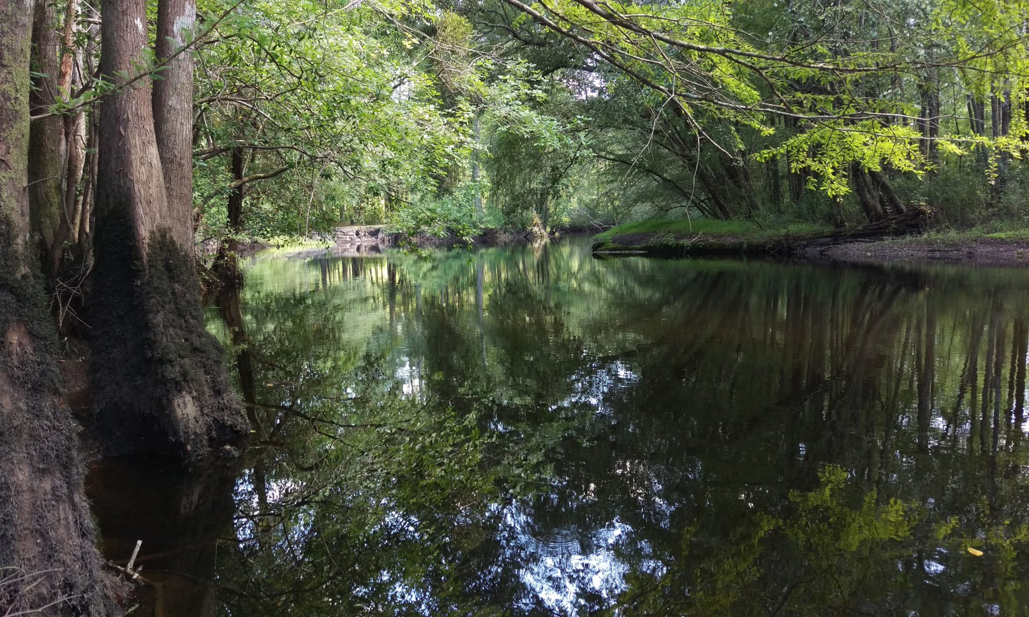 The Lumber River Conservancy